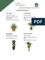 Plantas Ale