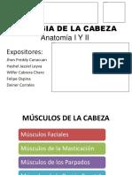 Miologia de La Cabeza