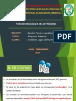 fijacion del nitrogeno expo.pptx