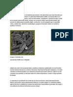 Las bacterias son organismos unicelulares procariontes.docx