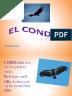 Ppt Condor