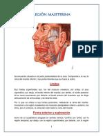 321027551-Anatomia-region-maseterina.docx
