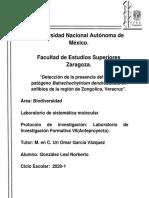 Detección de la presencia del hongo patógeno Batrachochytrium dendrobatidis en anfibios de la región de Zongolica, Veracruz