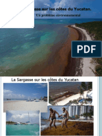 El Sargazo en la costas de Yucatán