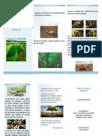 folleto Deforestacion.pdf