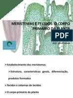 03.Meristemas e tecidos.pdf