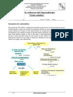 Ejercicios ciclo celular