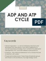 ATP-ADP-cycle (1)