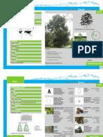 roble.pdf