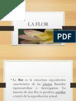 La flor descripcion