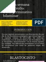 BILAMINAR (1)