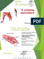 Il Muscolo (1)