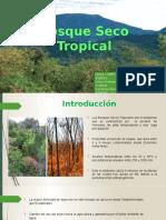 Bosque Seco Tropical 2.0
