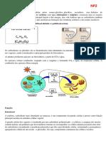 estudo_bioquimica_np2.pdf