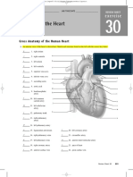 anatomyofheart.pdf