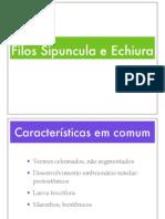 Sipuncula&Echiura_aula6