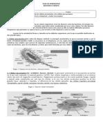 Células procarionte y eucarionte 8°