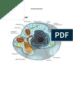 22341771-Taller-de-Biologia.docx