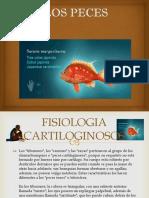 Diapositiva de La Fisiologia de Los Cartiloginosis