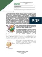 areas somatosensitivas