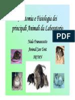 Anatomia dei ratti