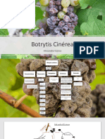 Botrytis Cinérea.pptx