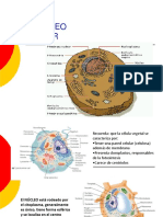 8_ Nucleo Celular