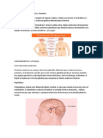 EATRUSTURA Sistema endocrino.docx