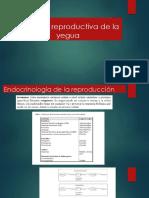 Fisiología Reproductiva de la yegua