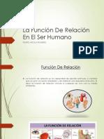 Funcion de Relacion del Ser Humano