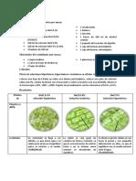 informe 4 de biologia.docx