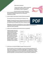Fisio SEMINARIO 12- Embarazo