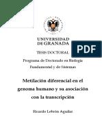 Metilación Diferencial en El Genoma Humano y Su Asociación Con La Transcripción.