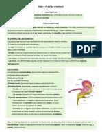 1º ESO. Naturales. Tema 4. Las Plantas y Los Hongos (SM)