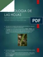 Morfologia de Las Hojas