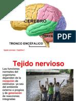 9-clase-cerebro-y-embriologia.ppt