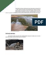 trabalho ensino fundamental sobre meio ambiente