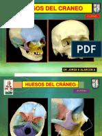Huesos Del Craneo 1