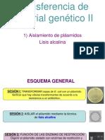 lisis alcalina plasmidos