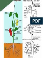 partes de una planta