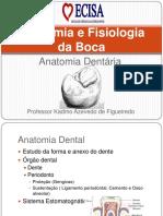anatomia e fisiologia da boca