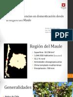 Maqui Experiencias en Domesticación Desde La Región Del Maule