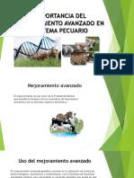 IMPORTANCIA DEL MEJORAMIENTO AVANZADO EN SISTEMA PECUARIO.pptx