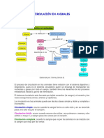 CIRCULACIÓN EN ANIMALES.docx