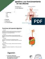 El Aparato Digestivo y Su Funcionamiento en Las Power Point