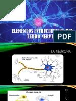 Elementos del tejido nervioso