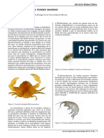 Macro Fauna