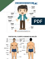 Cuerpo Humano en Ingles