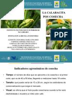 calabacita pos cosecha (laura).pdf