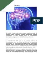 La Química Del Cerebro
